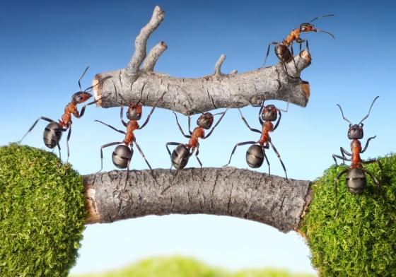 myrer i samarbejde